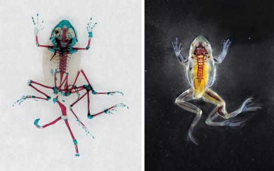 Mutant Frog and Phaethon